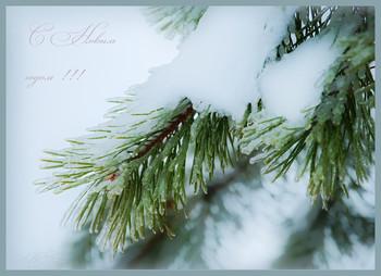 С Новым годом! / Всех друзей с Новым годом! Желаю вам много счастья в новом году, творческих идей и отличного их воплощения!!!