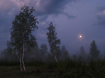 Березы под луной перед рассветом на 1-ом уч-ке в июне 2008 / Березы под луной перед рассветом на 1-ом уч-ке в июне 2008