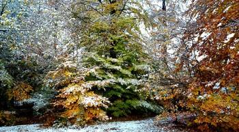 Запах зимы.. / У каждого времени года  Наверное,есть стойкий запах..  Зима,например,приходит  На мягких,пушистых лапах...    Зимою темнеет рано  И пахнет ночами длинными  Я зиму люблю так странно  Зима пахнет мандаринами...