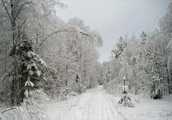 Вот такой он январь / 16 января 2005 года. Давно такой красивой зимы не бывало....