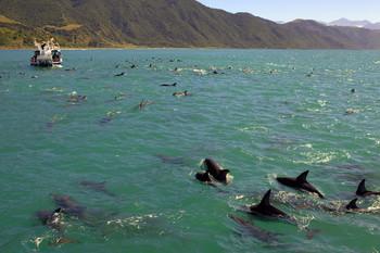 Стая дельфинов / ...