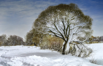 дерево зимой / ***