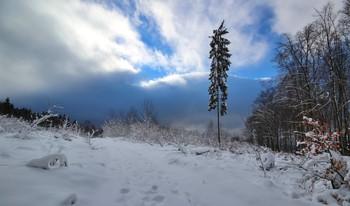 Одинокая сосна / Непогода в горах