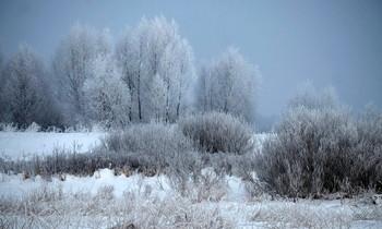 Пасмурное утро. / Природа Подмосковья.