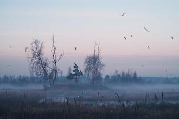 Чайки над болотом на 1-ом уч-ке утром летом 2006 / Чайки над болотом на 1-ом уч-ке утром летом 2006