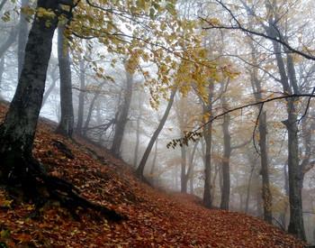 Кавказская осень.... / Железноводск. Октябрь