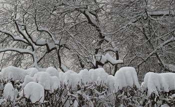 Московские снега... / Радует нас зима...