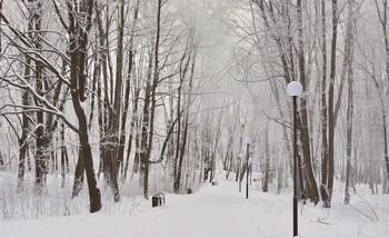Всё покрыто инеем / В парке всё покрылось инеем, и при небольшом ветерке иней облетает с деревьев