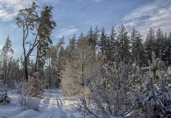 Зимний день / снег,солнце
