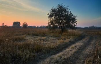 Утро поздней осени / Осенний пейзаж. Октябрь 2015.