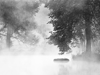 Птица на бревне в середниковском пруду летом 2008 / Птица на бревне в середниковском пруду летом 2008