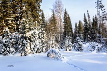 В Сибирском лесу... / Зимний лес похож на огромный дворец, где живет зима, суровые деревья, как стражи, стоят смирно, одетые в ледяные латы, которые им создал мороз