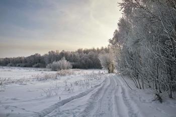Зима / зима,мороз,иней,снег