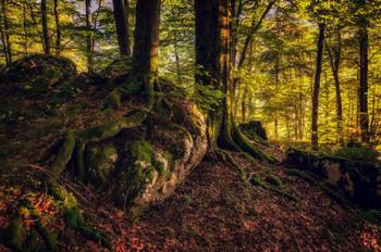 """Pro сказочный свет в Волшебном лесу... / """"Волшебный лес"""" окружает со всех сторон озеро Хинтерзее, что неподалёку от городка Рамсау, Верхняя Бавария.  http://www.youtube.com/watch?v=vv5UKpftub4"""