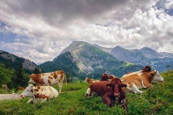 """""""И жизнь хороша, и жить хорошо!"""" / Снято на плато горы Йеннер, высота около 2 км Альпы, Берхтесгаден, Верхняя Бавария.  http://www.youtube.com/watch?v=1rPAnxsSk40"""