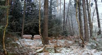 В дали от шума городского.. / Идя по лесу увидел эту картину...  Зимний лес,это сказочный сон  В нём волшебностью веет повсюду...
