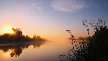 Летнее утро. / Озеро Сосновое, юго-восток Московской обл.