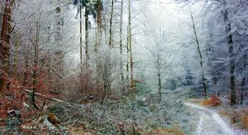 Белоснежные зимние краски.. / Этим волшебным зимним днём  Красиво было,как в сказке :  Деревья горели белым огнём  Пылали белые краски...