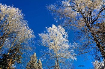 Потрясающее явление... / Иней на деревьях – это просто сказка! Это потрясающе красиво, как будто попадаешь в какое то снежное царство.Такая завораживающая красота пробуждает в душе романтические чувства. Напоминая о том., как великолепна природа во всех своих проявлениях.