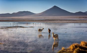 Спокойствие Красной Лагуны / Студеное утро на берегу соленого озера. В этом месте в него впадают горячие ключи, и это привлекает сюда лам, фламинго и других обитателей высокогорного плато Альтиплано. Национальный заповедник фауны Андов Эдуардо Авароа, Боливия