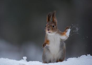 Снежки...зимняя забава / .....