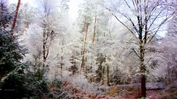 Поэзия зимнего леса. / Чародейкою зимою  Околдован, лес стоит  И под снежной бахромою  Чудной жизнью он блестит..