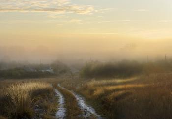 Дорога в туман / утро