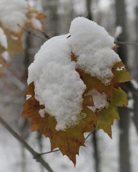Этюд... / Лесные зимние зарисовки...