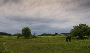 Сельский пейзаж / лето в деревне