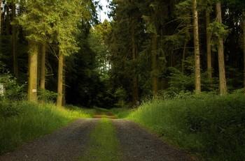 ПРОсвет / Летний лесной пейзаж .