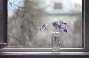 Февральская акварель / Зимние ирисы цветут в палисадниках Ялты