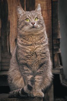 Смирно! Во весь рост. / Кота зовут Николя. Очень хороший позёр.