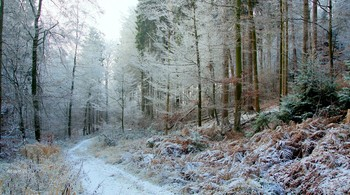 Дыхание зимы.. / Зимний лес в объятьях тишины задремал,  укутав ветки инием и снегом..  Он будет спать спокойно до весны   под этим белым,серебристым небом..