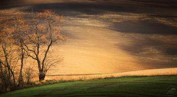 """""""Рисует осень на полях"""" / Моравия, Чехия"""