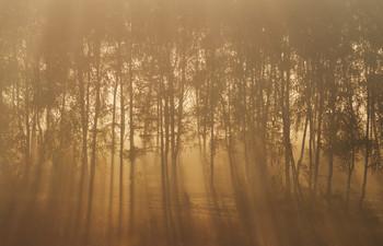 Золотое утро золотой осени / утро, туман, свет