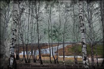Любимое место Анны... / Берёзовый склон на Увале