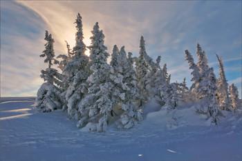 Fairy forest / Сказочный лес