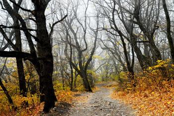 Утром туманным......... / КМВ. Железноводск. Октябрь