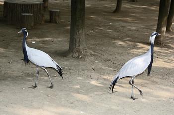 Раздвоение не личности / В птичьем зоопарке города Чэнду. Китай, провинция Сычуань.