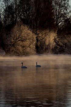 лебединое озеро / Прогулка на рассвете на Лебедином озере. Алтай