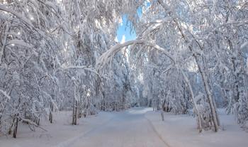 Белоснежная аллея / Зимний лес на Урале