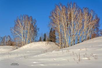 Без названия / Берёза — белоствольная красавица. Берёза — одно из самых распространённых и красивых деревьев в нашей стране. Его милый образ необычайно притягателен своей искренней естественностью и щемящей душу нежностью