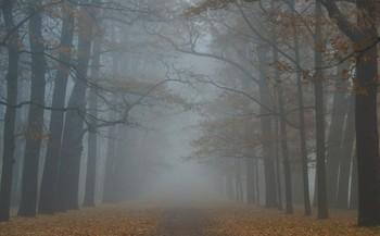 Осенняя прогулка... / Екатерининский парк