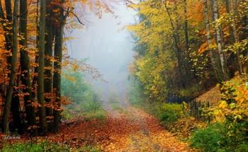 Осень свежестью дышала.. / Вспоминая прошедшее время,время поздней осени,дождей и частых туманов...