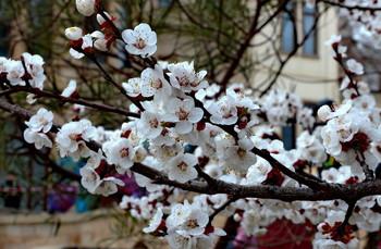 Весенний этюд / снимок сделан в г Баку