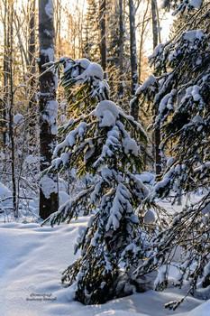 Лес... / Лес это целое отдельное государство, которое наполняют птицы, насекомые и животные. В любое время года природа в лесу очень красива, Зимой в лесу можно увидеть тропы животных, которые не впадают в спячку и продолжают свою жизнедеятельность.