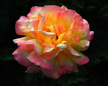 С Праздником милые женщины !!! / Пусть в этот день весенними лучами Вам улыбнутся люди и цветы, И пусть всегда идут по жизни с Вами Любовь, здоровье, счастье и мечты!