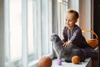 Игра с котиком /