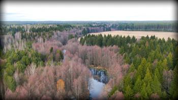 Без названия / р.Волма. Снято с дрона. Вдоль реки заросли ольхи с ее красноватым оттенком.