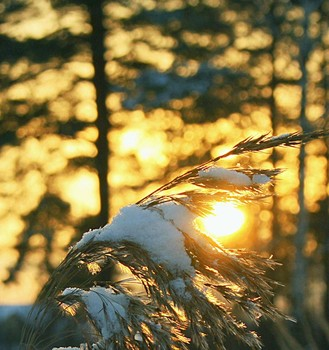 Снег и солнце. / Вечная борьба света и тьмы, тепла и холода.